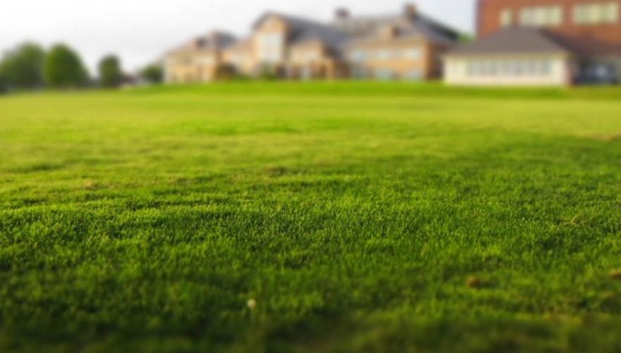 Dosejevanje trave - kako poskrbeti za lepo in bujno trato