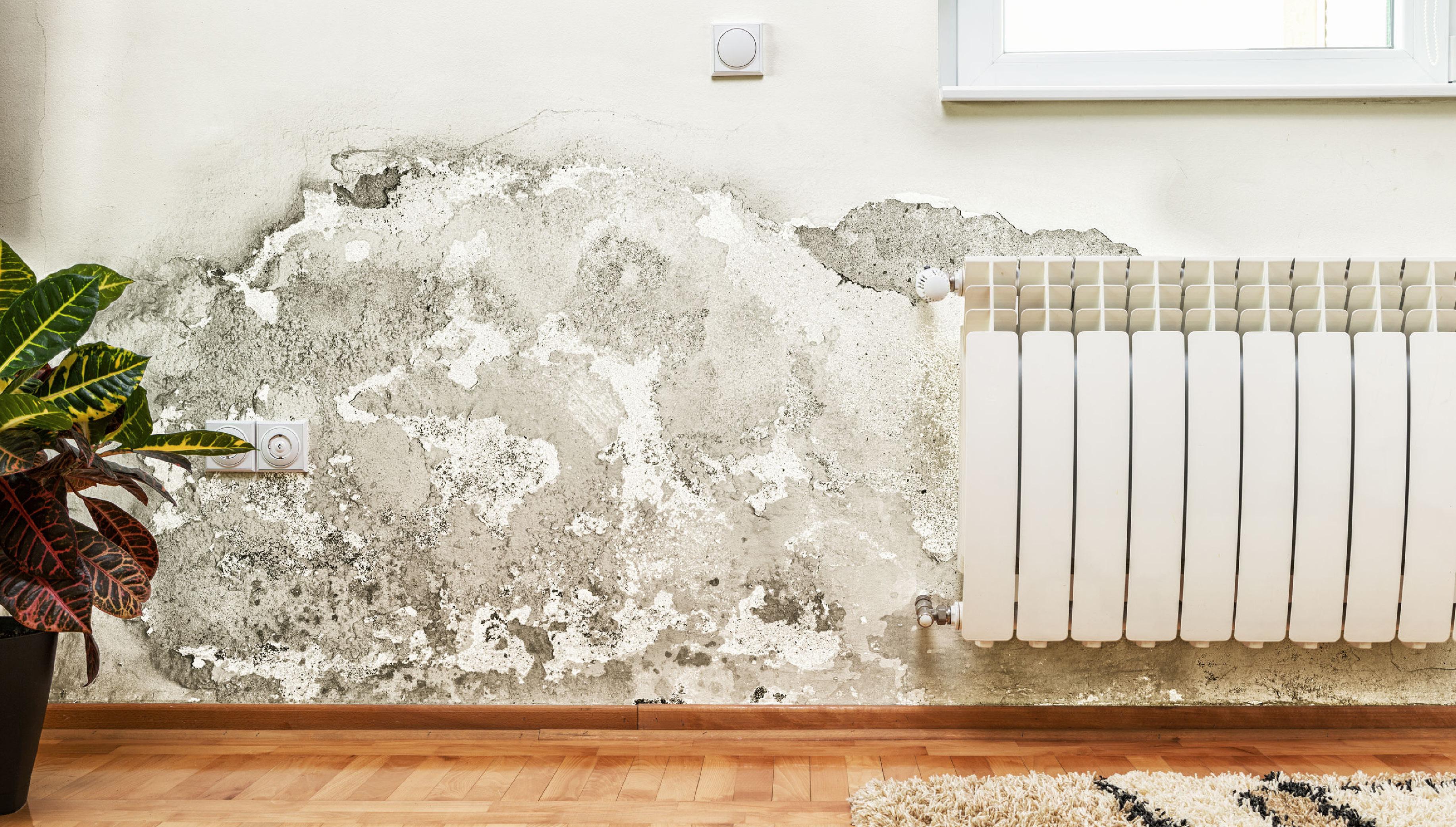 Kako odstraniti zidno plesen?