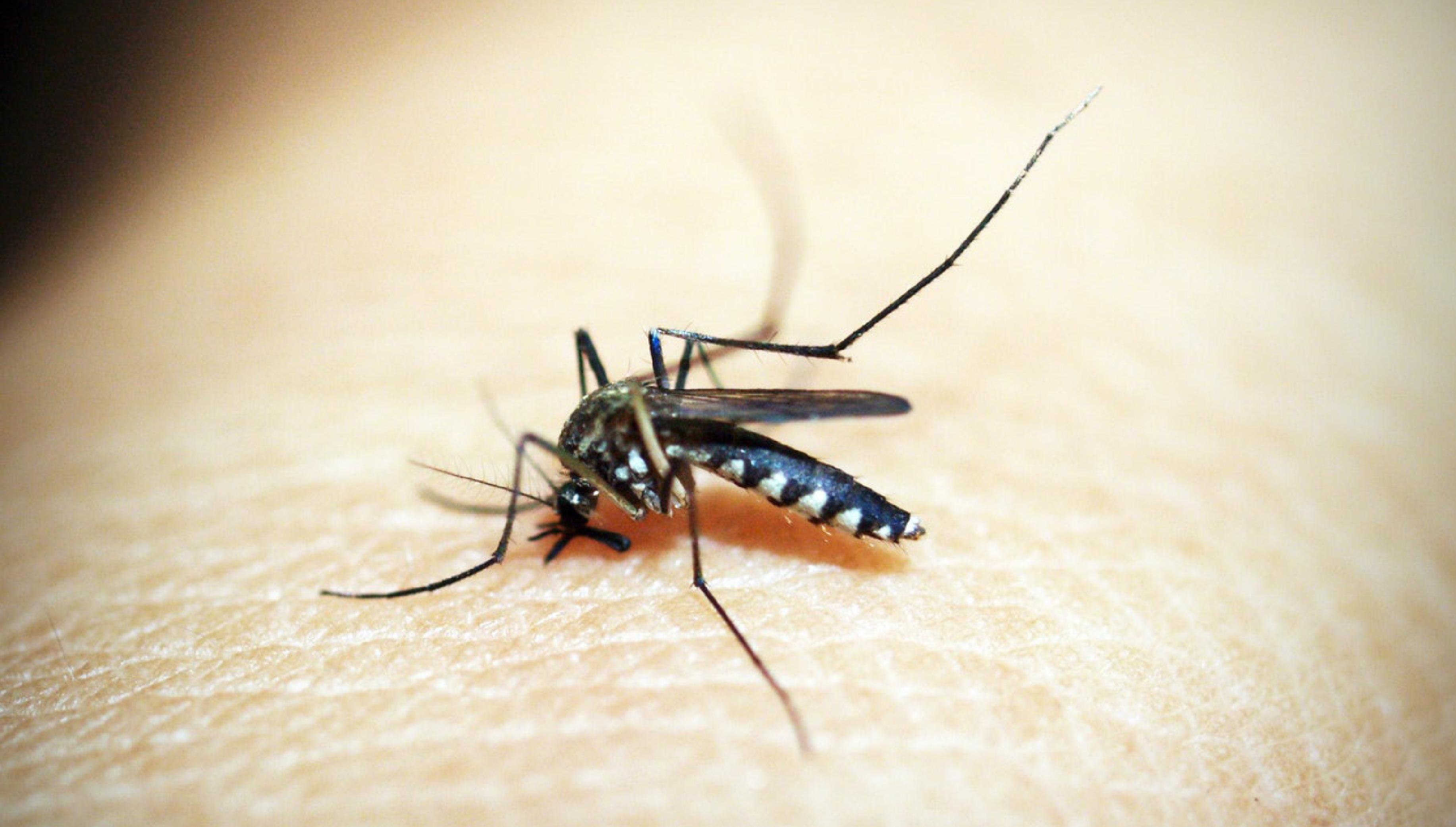 Poletje brez komarjev