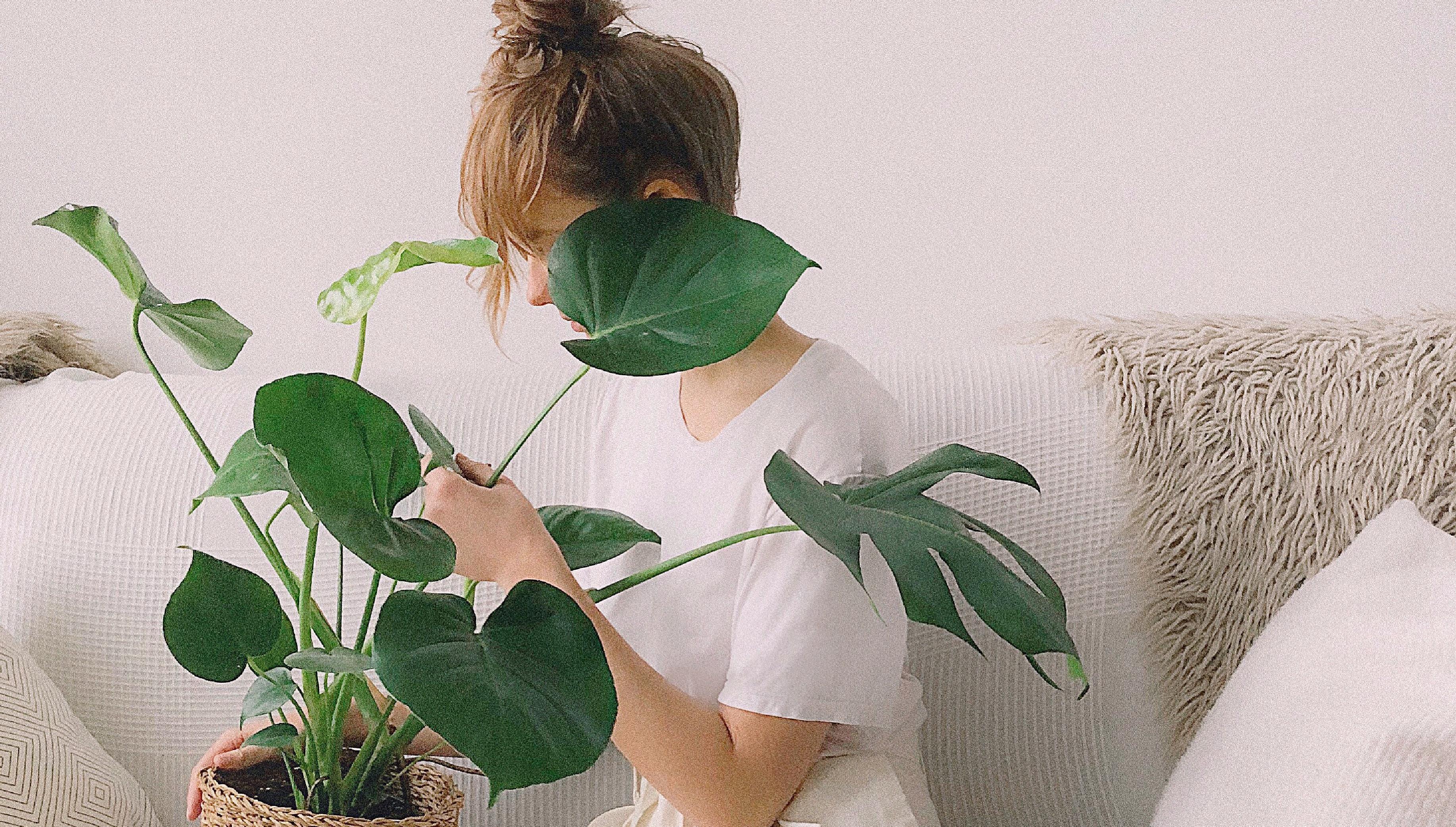 Sobne rastline - čistilci zraka v vašem domu